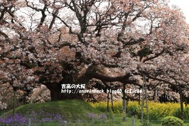 EOS6D_2015_04_12_9999_109.jpg
