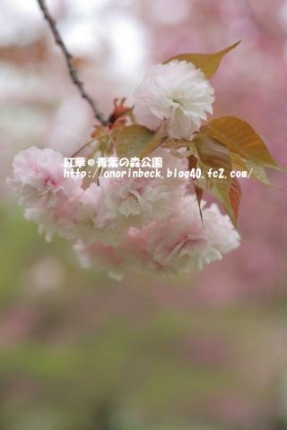 EOS6D_2015_04_19_9999_59.jpg