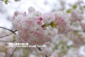 EOS6D_2015_04_19_9999_96.jpg