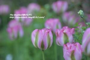 EOS6D_2015_04_26_9999_368.jpg