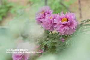 EOS6D_2015_04_29_9999_288.jpg