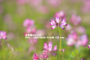 EOS6D_2015_04_29_9999_417.jpg