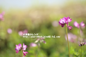 EOS6D_2015_04_29_9999_420.jpg