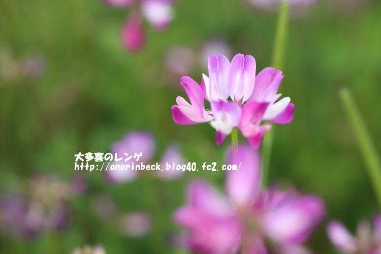 EOS6D_2015_04_29_9999_447.jpg