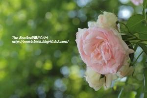 EOS6D_2015_05_17_9999_171.jpg