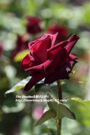 EOS6D_2015_05_17_9999_32.jpg