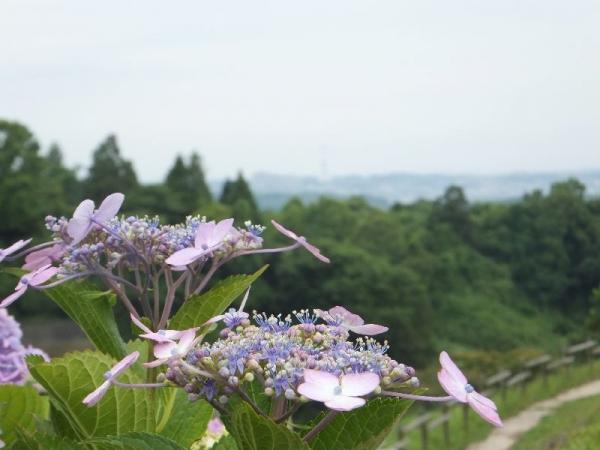 ChihayaTanada_005_org.jpg