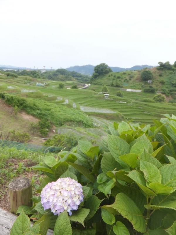 ChihayaTanada_006_org.jpg