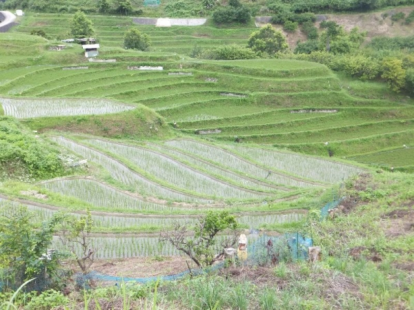 ChihayaTanada_007_org.jpg