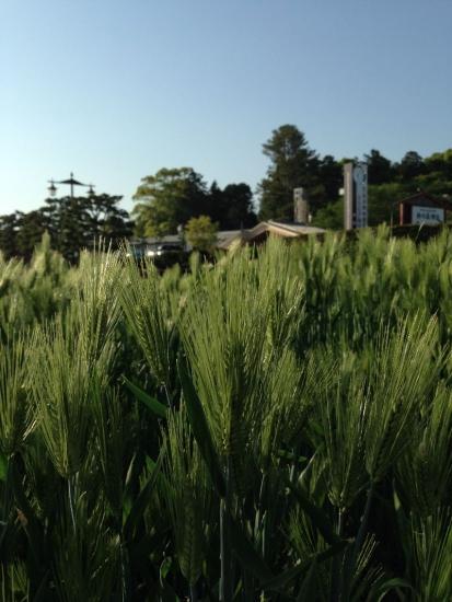 FukusakiMochimugi_001_org.jpg