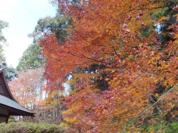 Hirokawadera_001_org.jpg