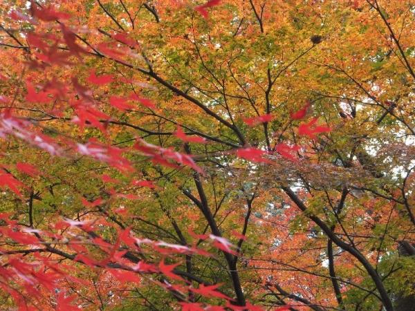 Hirokawadera_002_org.jpg