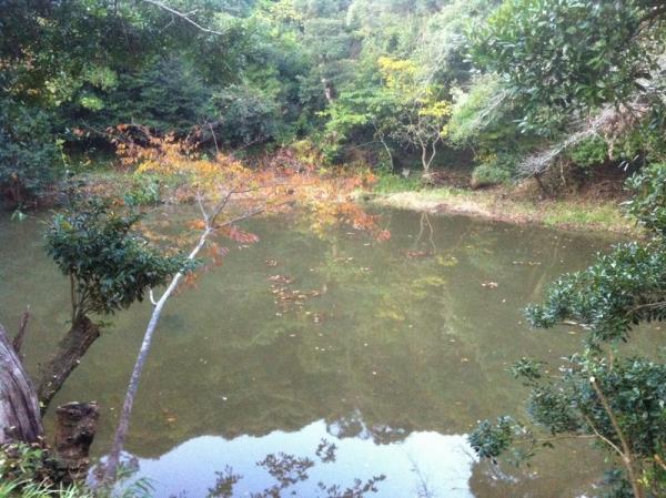 InabaUsagi_006_org.jpg