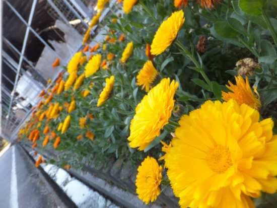 KougaNarita_003_org.jpg