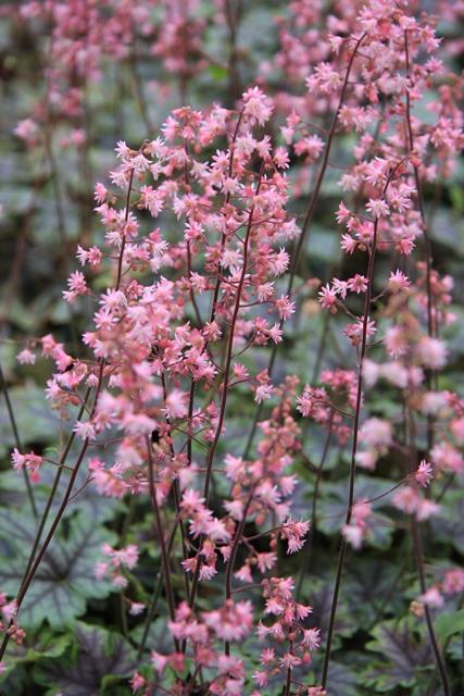 タペストリー花