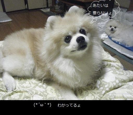 DSCF8694.jpg