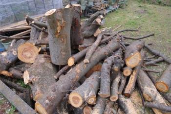 ケヤキの大木2本分と桜の木材