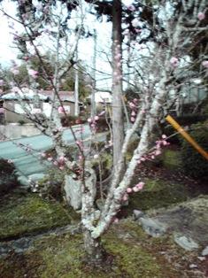 2015_03_24_花垣神社_19