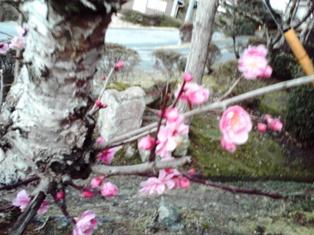 2015_03_24_花垣神社_20