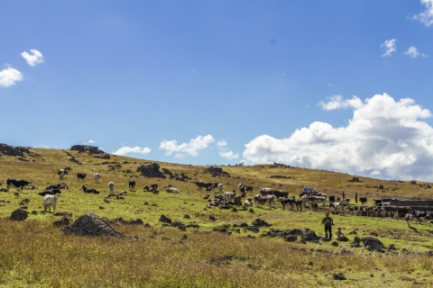 牛いっぱい