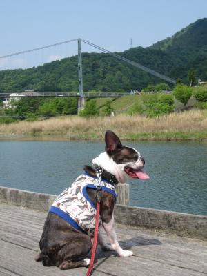 広~い お散歩コース