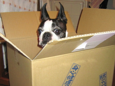 箱入り息子が出来上がりました