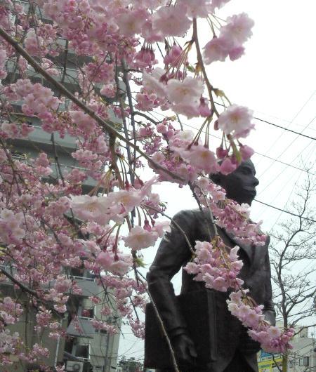 150410桜1
