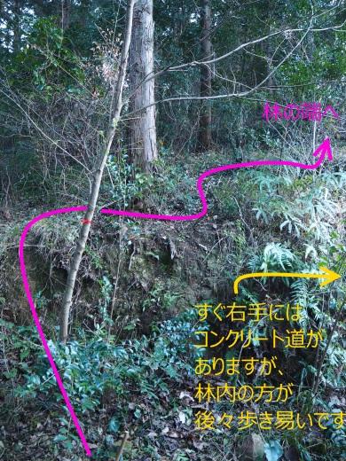4三ツ尾山登山道2 (25)