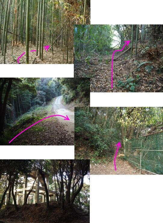 9神園山登山道
