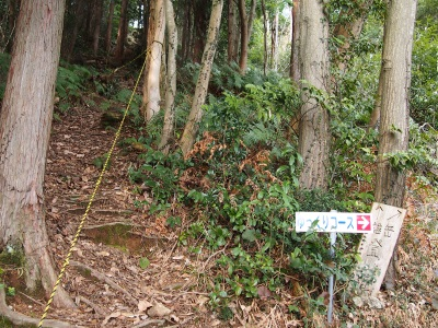 10男岳登山道