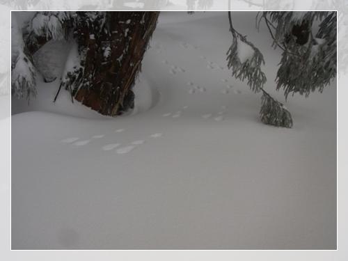 恐羅漢山002