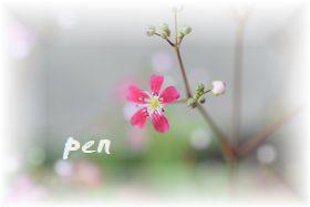カスミ草p4
