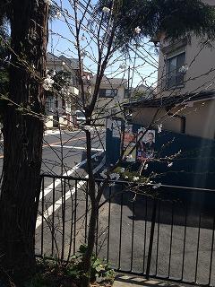 2015-03-31 桜3