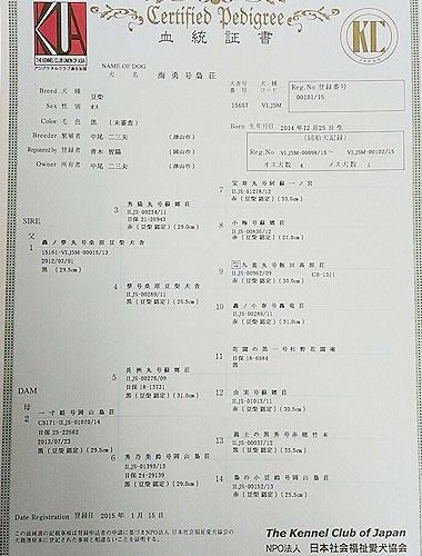 豆柴141225血統書