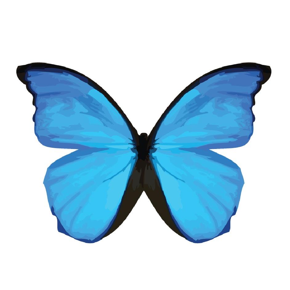 zaggora-blue-butterfly-logo[1]