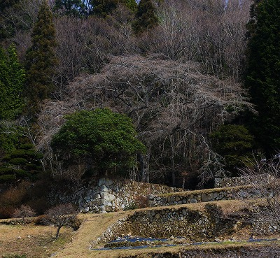 芸北の春4