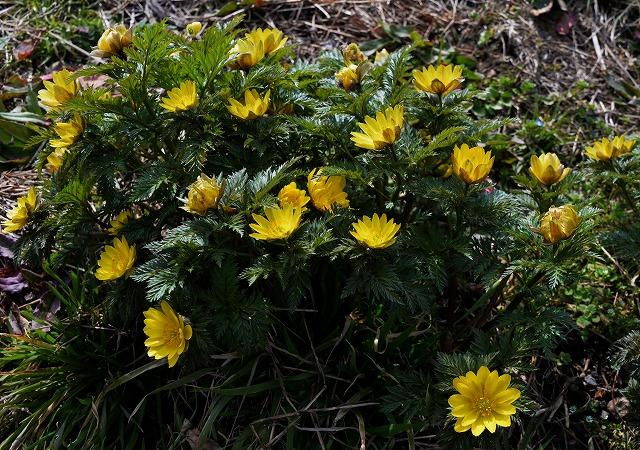 芸北の春9