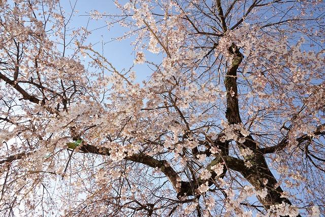 向原の春3