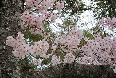 春爛漫12