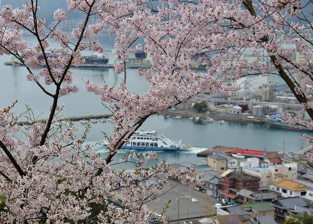 沿岸の桜6