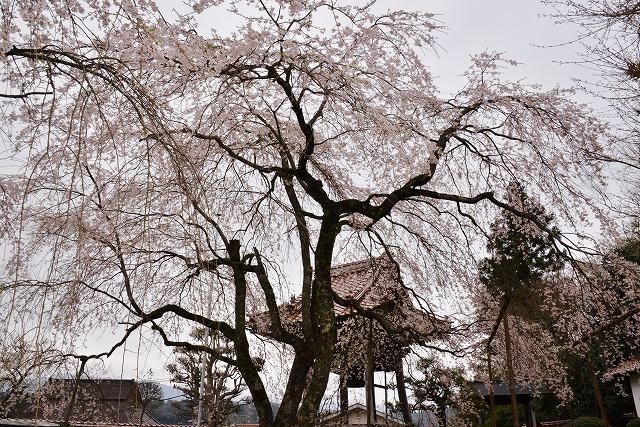 円立寺12