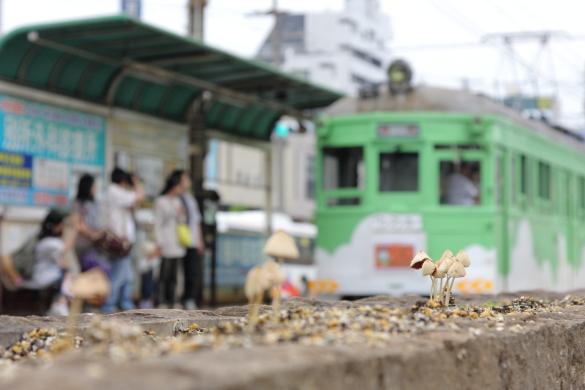 2011年6月 阪堺電軌阪堺線 妙国寺前