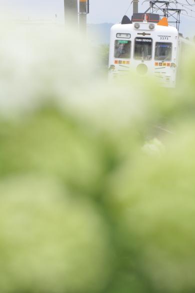 2015/7/4 和歌山電鐵貴志川線 竈山~交通センター前
