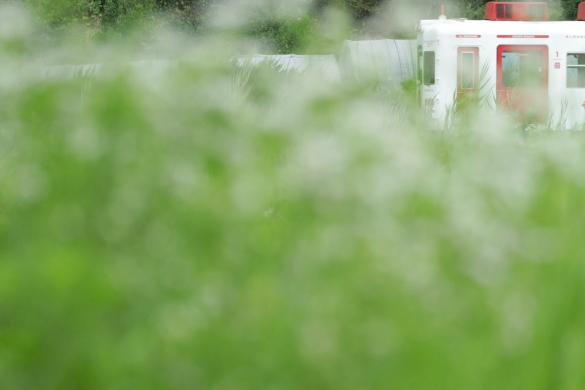 2015/7/4 和歌山電鐵貴志川線 吉礼~伊太祈曽