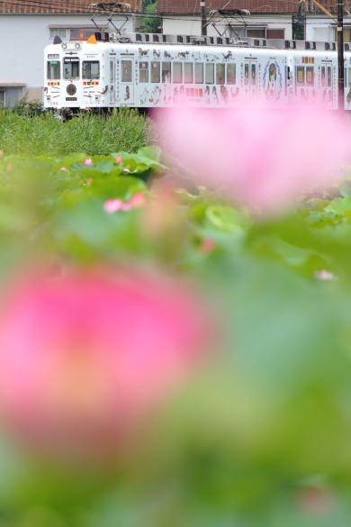 2015/7/11 和歌山電鐵貴志川線 甘露寺前