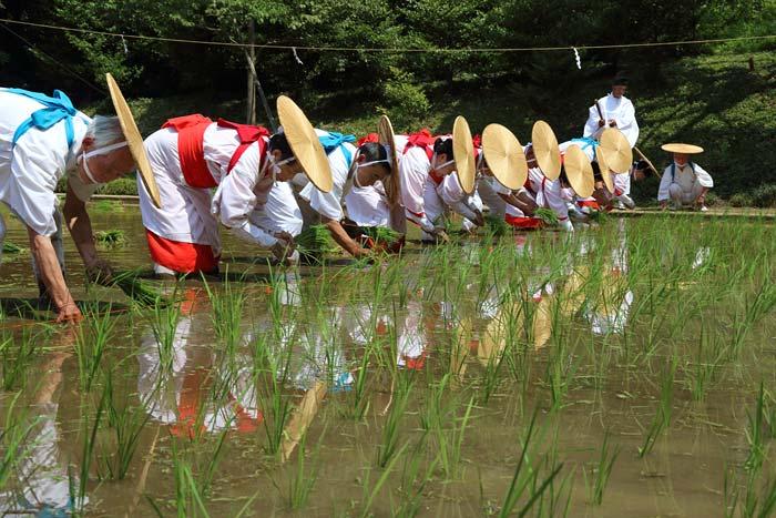 大神神社 御田植祭3