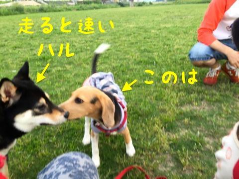 th_IMG_2161.jpg