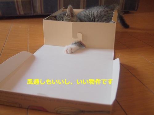 P5177661.jpg