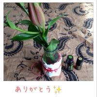fc2blog_201504280307085ad.jpg