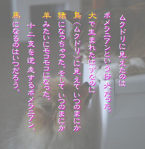 20150101-8.jpg